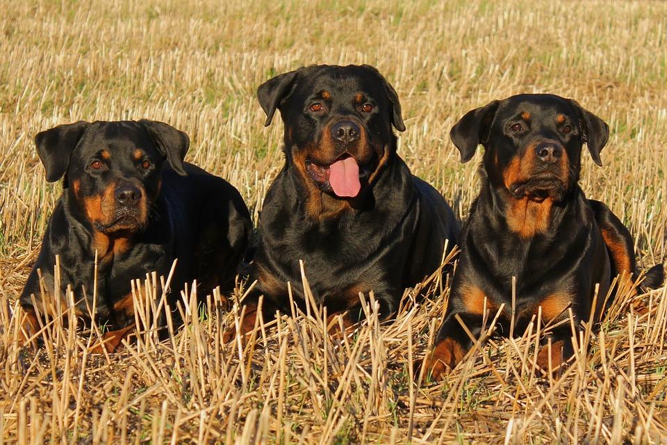 cachorros na grama