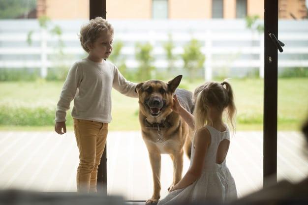 pastor alemão com crianças