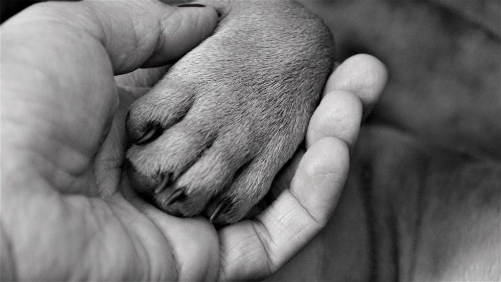 curiosidades sobre patas de cachorros