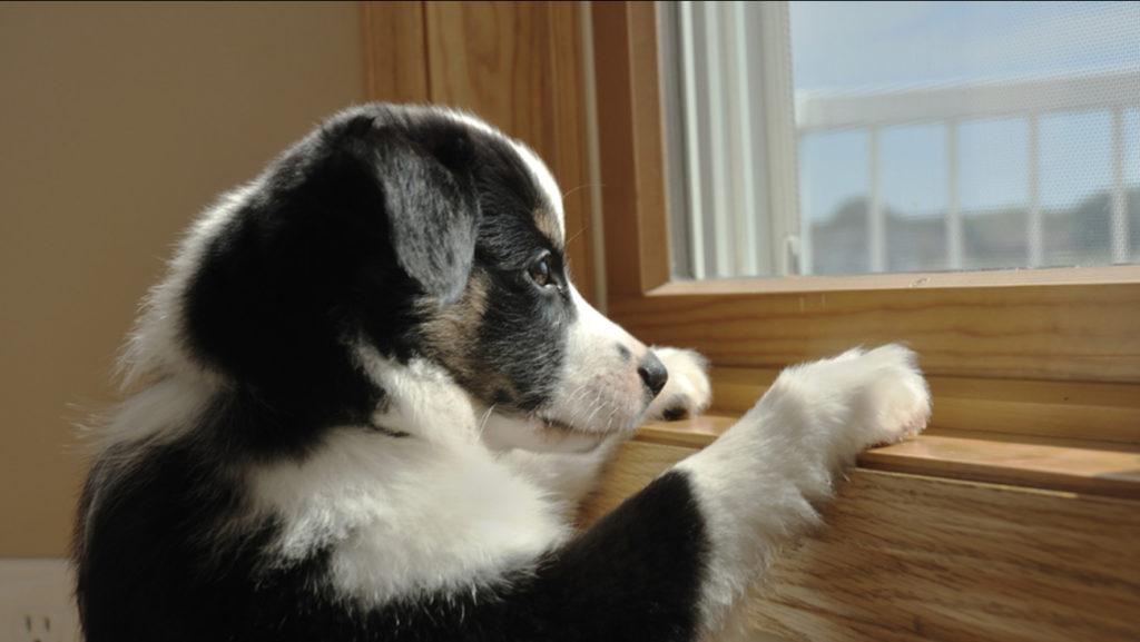 Cães e doenças.