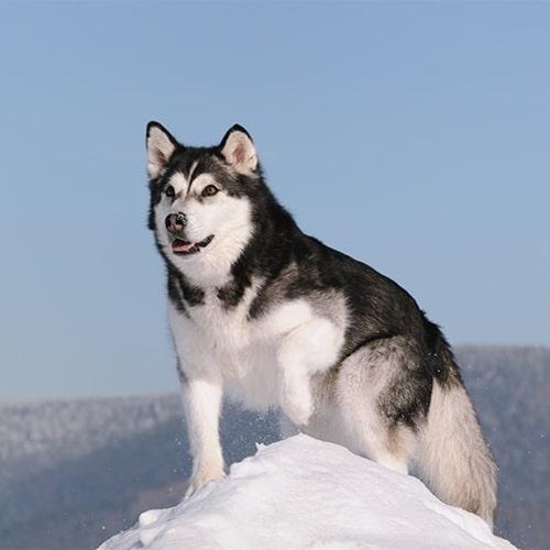 cachorro em clima frio