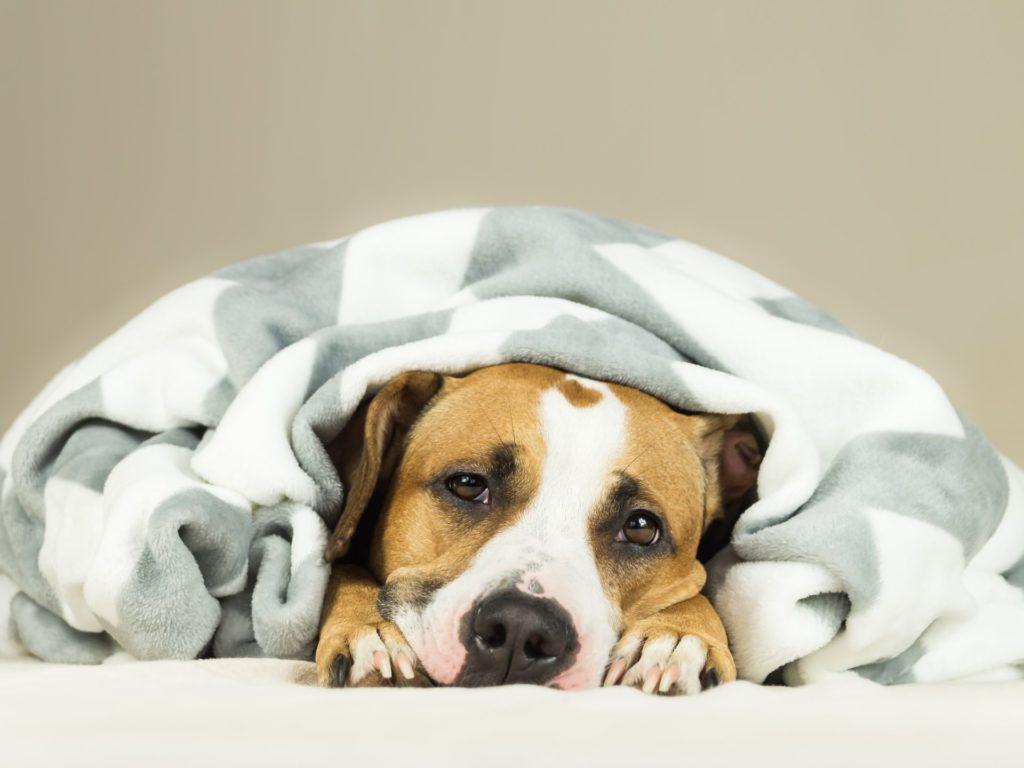 Cachorro e eutanásia.