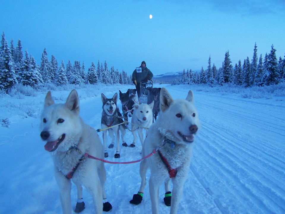 exercícios Malamute do Alasca