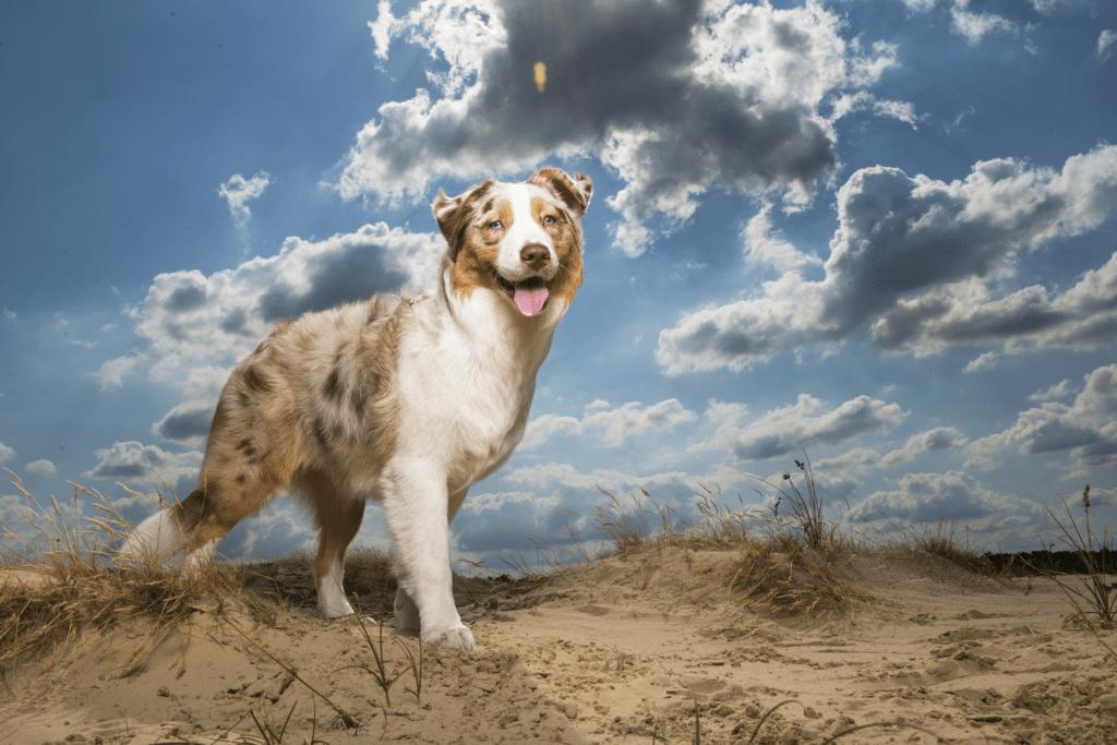 caspa no cachorro