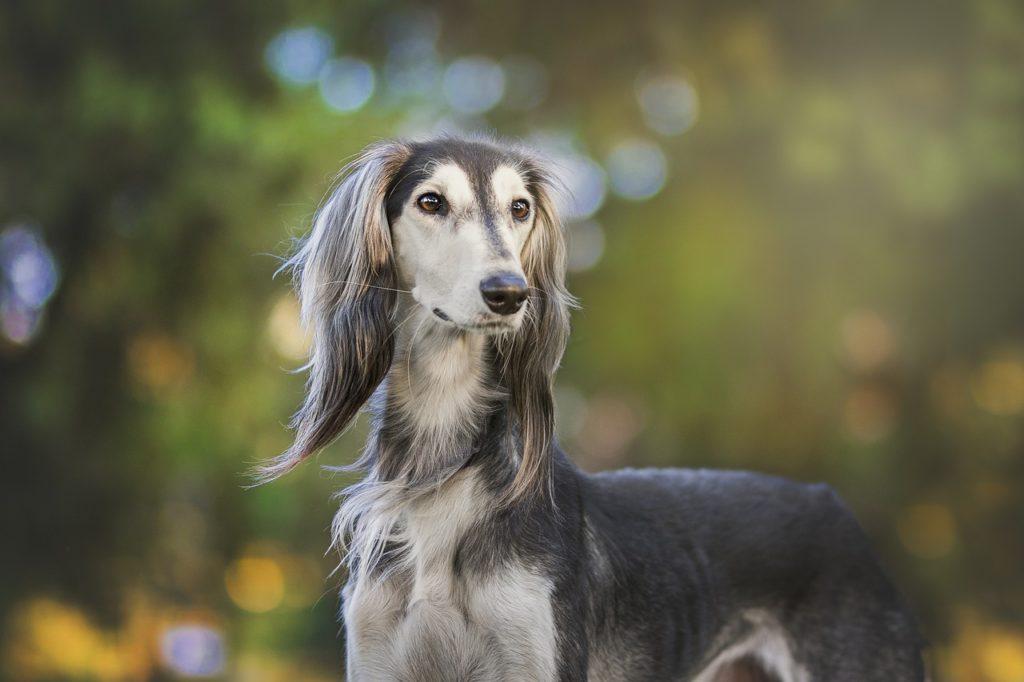 Historia do Greyhound