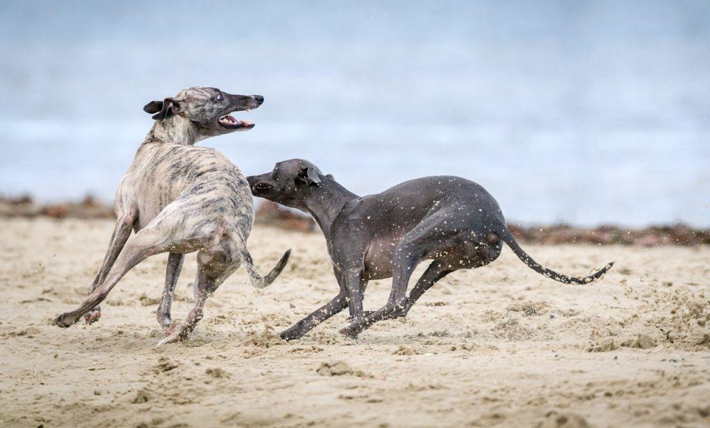 O Greyhound com crianças, desconhecidos e outros animais