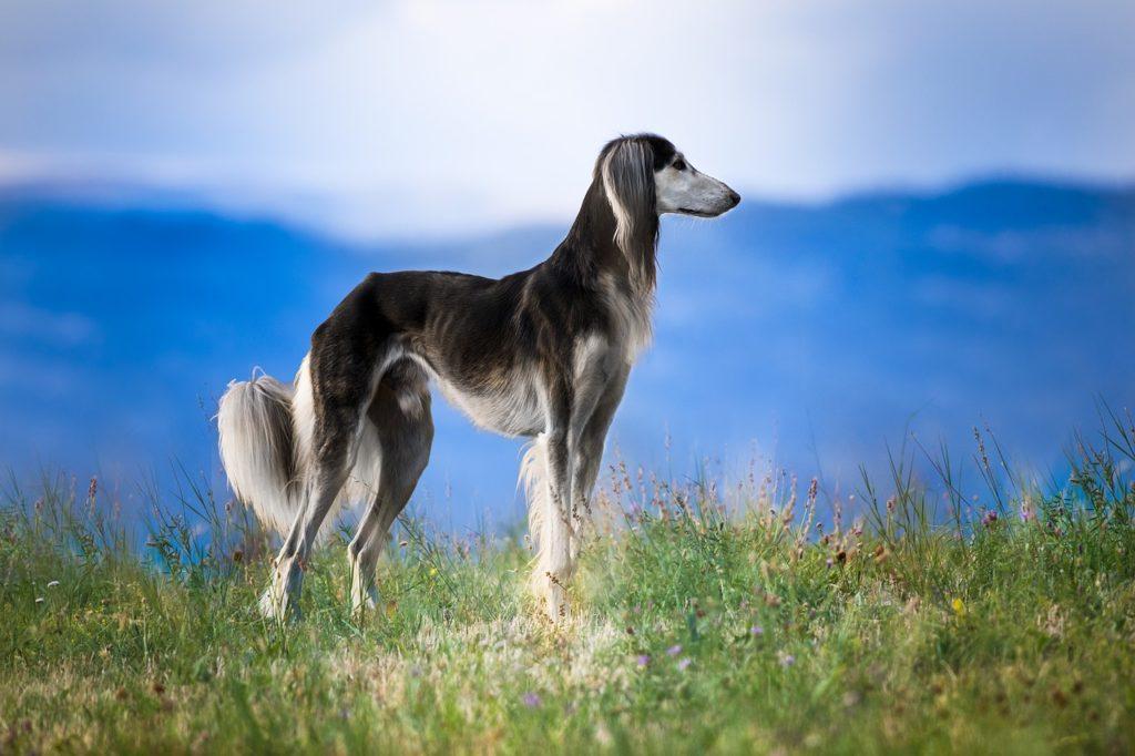 O  Greyhound  e a nobreza