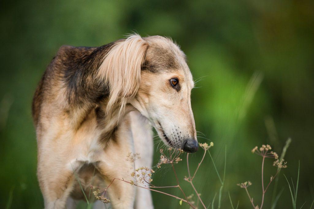 Fotos de Greyhound