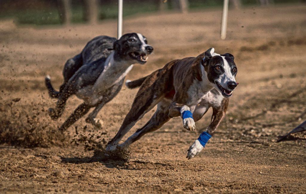 cachorros velozes