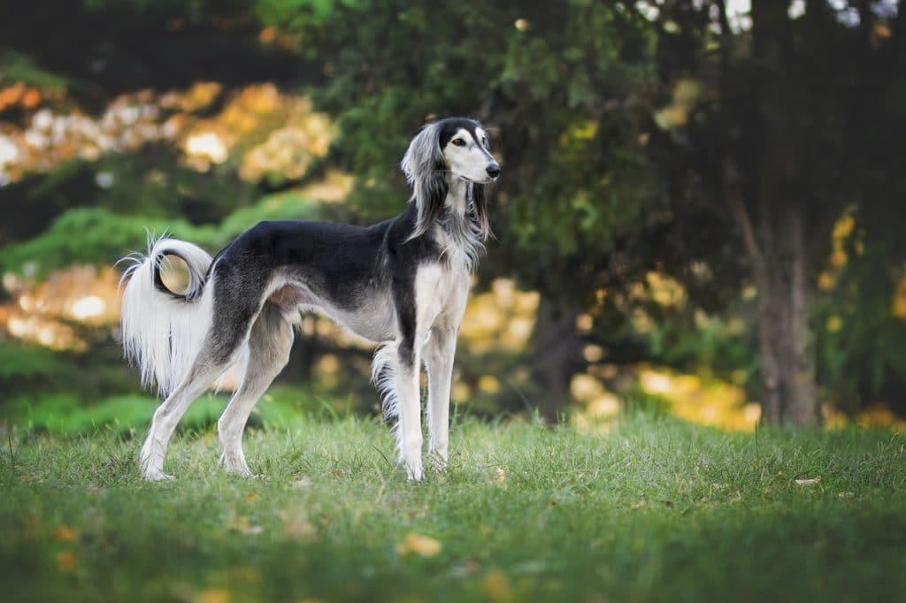 Cuidados com o Greyhound