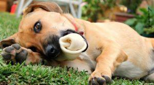 osso para cachorro