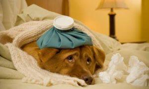 Na foto um cachorro doente deitado em uma cama.