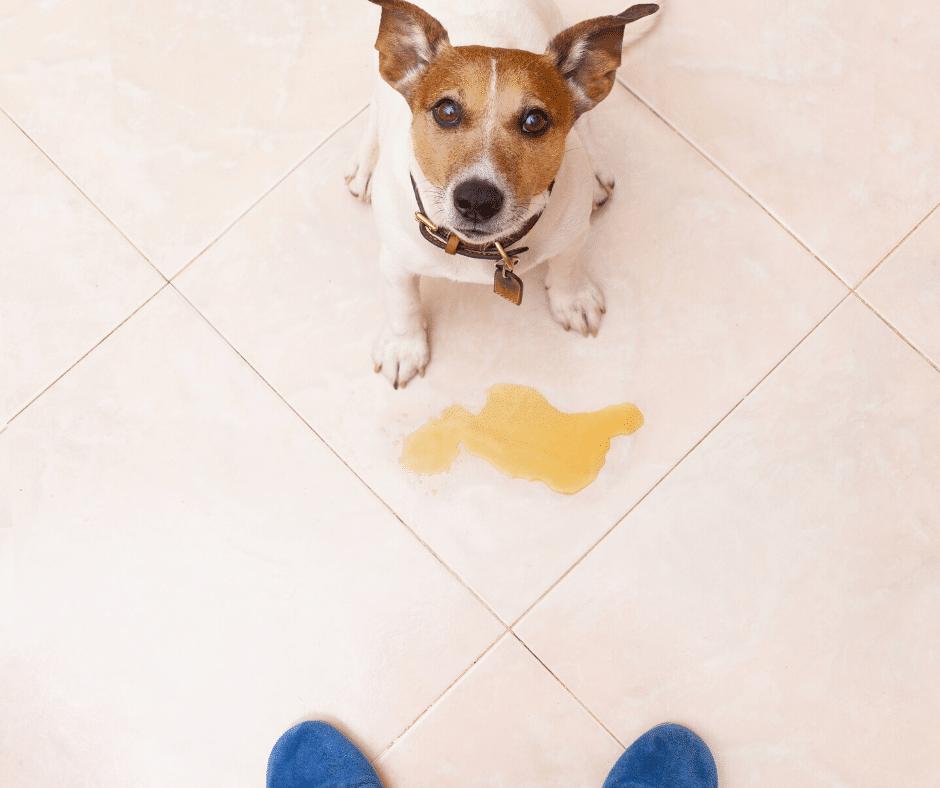banheiro de cachorro em apartamento