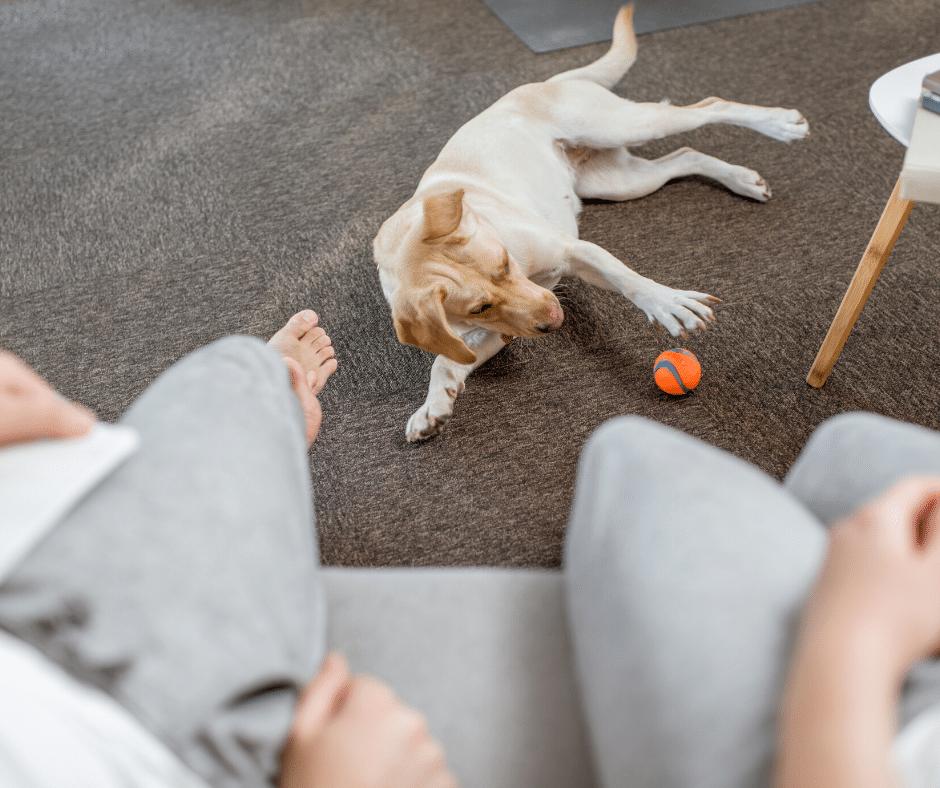 brincadeiras com cachorro
