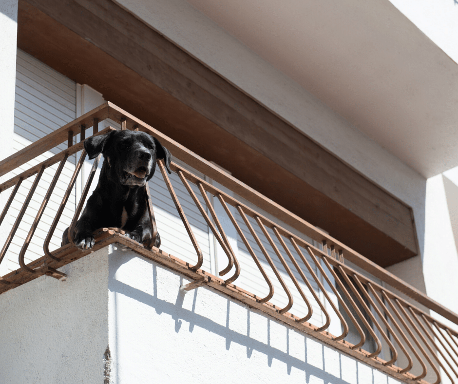 cachorro em apartamento