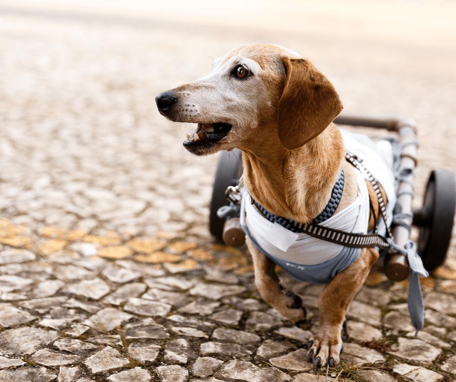 cadeira de rodas canina caseira