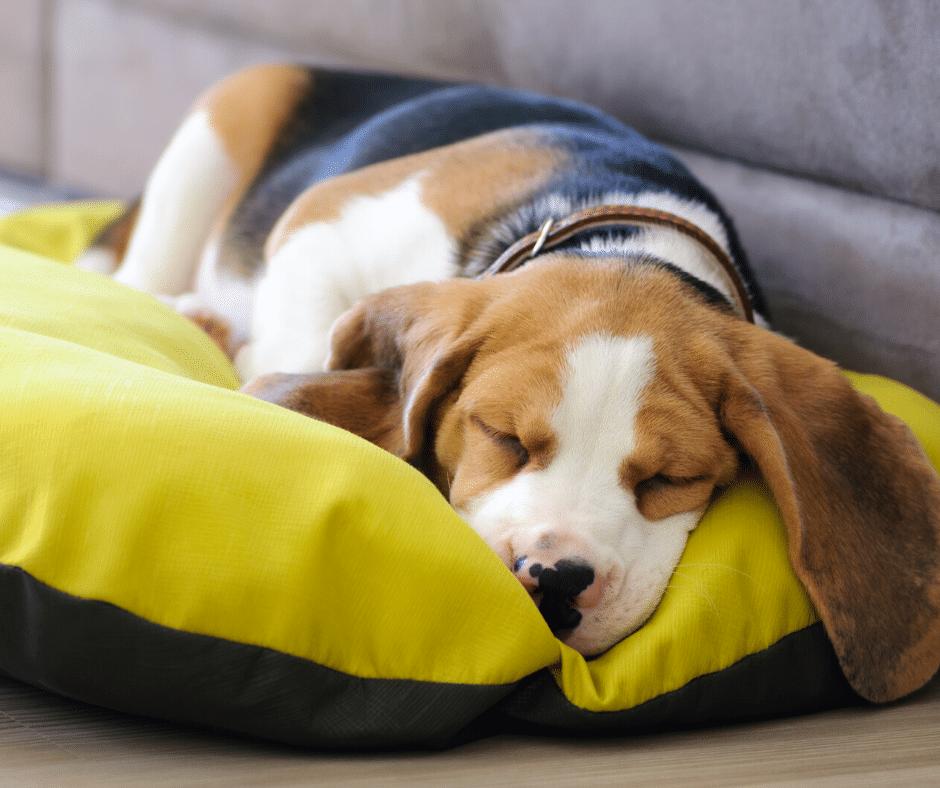 onde colocar a cama do cachorrinho