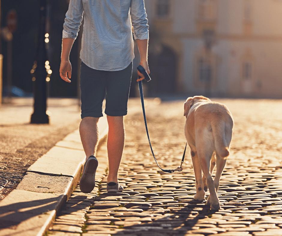 passeio com cachorro