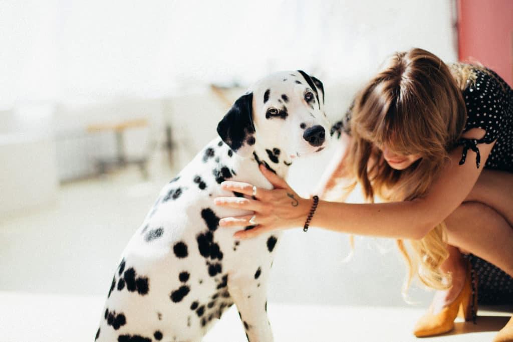 Raça de cachorro grande: cachorro dálmata