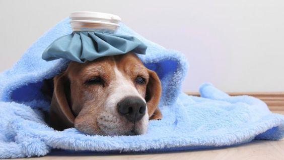 Na foto um cachorro doente deitado.
